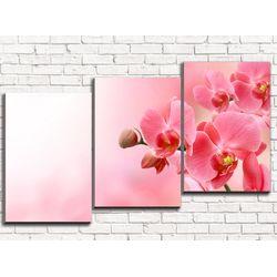 Модульная картина Нежная орхидея 120х60 см